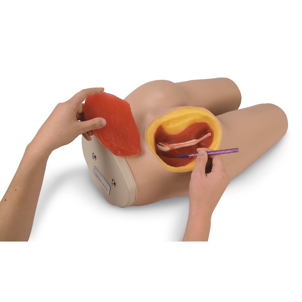 Life/form® Intramuscular Injection Simulator